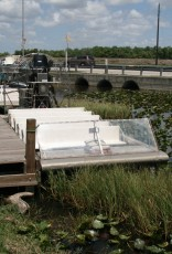 Everglades-Tour mit Airboat und Alligatoren XXII