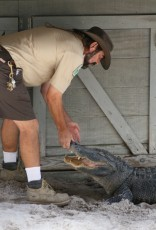 Everglades-Tour mit Airboat und Alligatoren XV