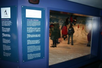 Christchurch - International Antarctic Centre II