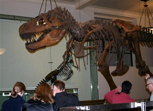 American Museum of Natural History IX