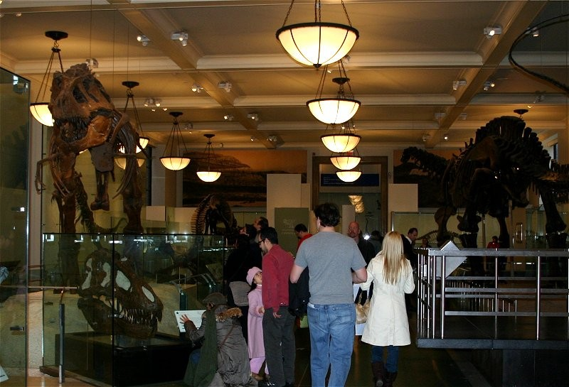 American Museum of Natural History VIII