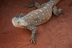 Alice Springs: Reptile Centre