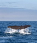 Whale-Watching in Kaikoura III