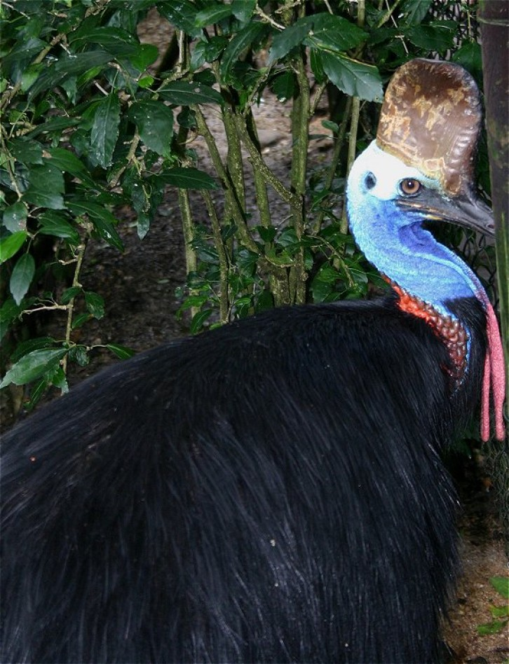 Kuranda: Birdworld V