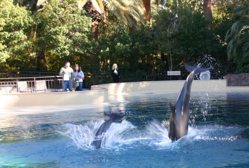 Mirage Dolphins & Secret Gardens XI