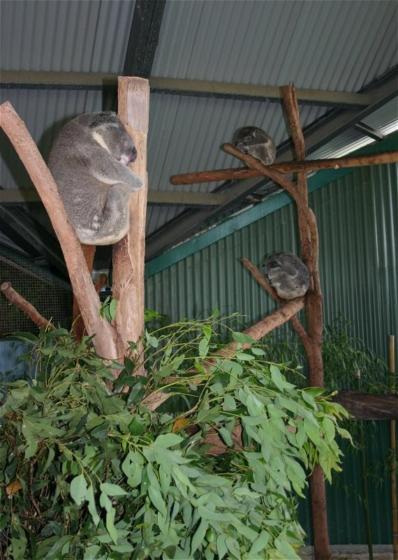 Billabong Koala & Wildlife Park I