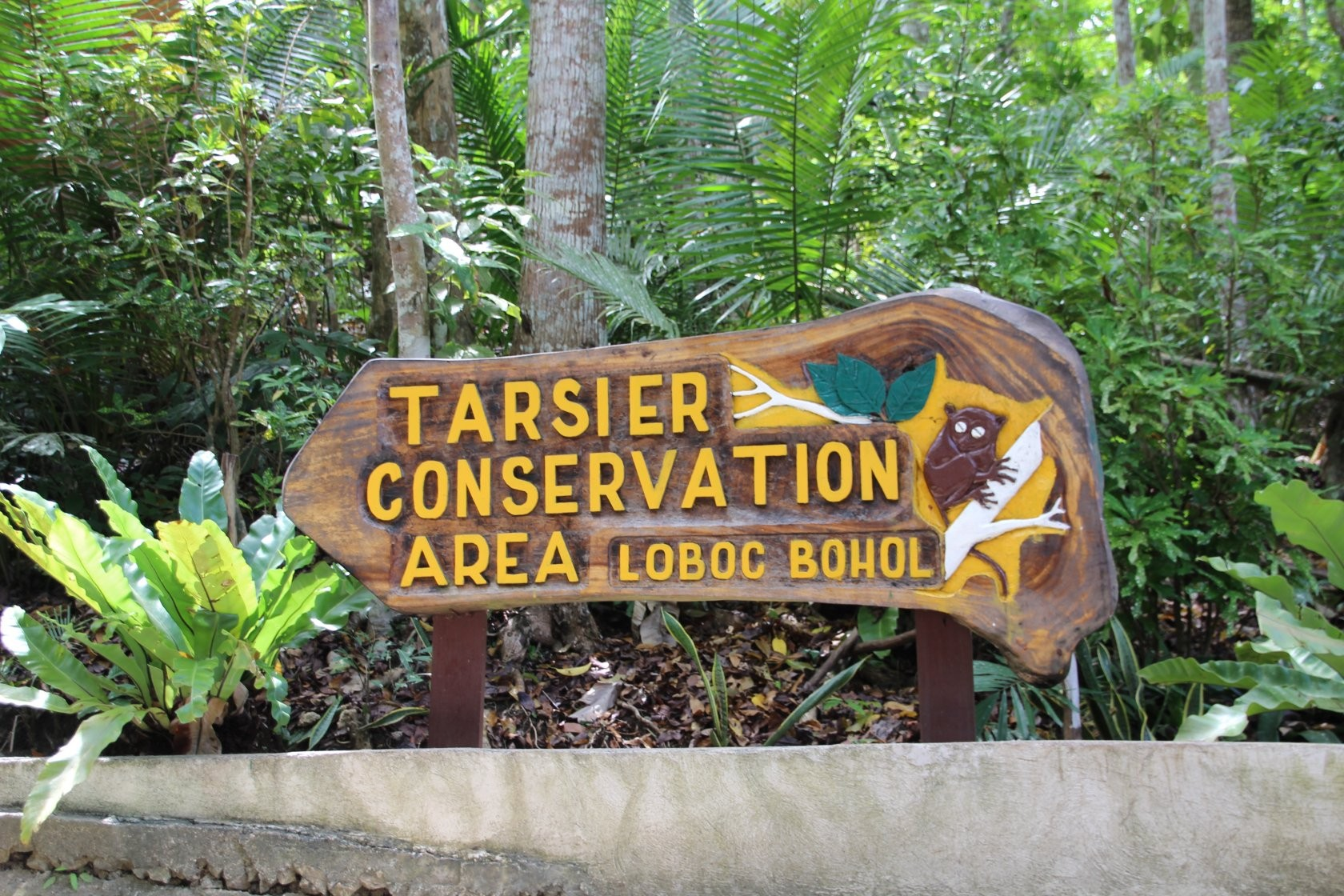 Bohol - Tarsier Sanctuary / Visitor Center VII
