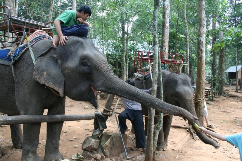 Koh Chang - Ban Kwan Elephant Camp X
