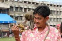 Lopburi - Monkey Buffet/Festival 2012 CX