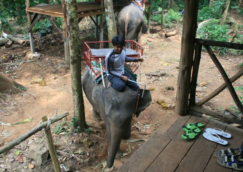 Koh Chang - Ban Kwan Elephant Camp II
