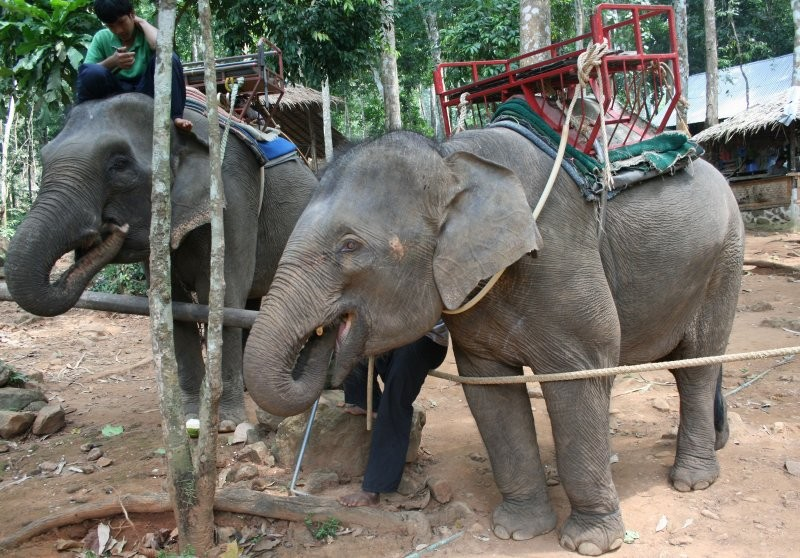 Koh Chang - Ban Kwan Elephant Camp XI