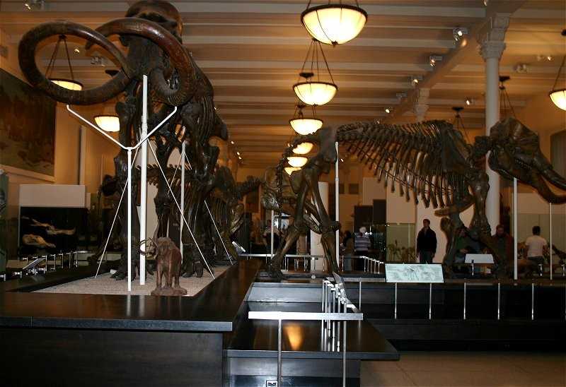American Museum of Natural History XI