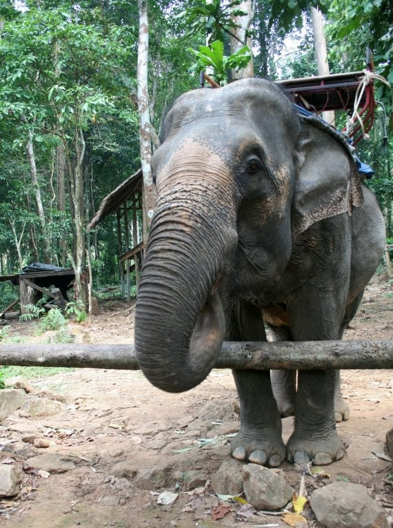 Koh Chang - Ban Kwan Elephant Camp VIII