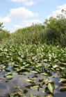Everglades-Tour mit Airboat und Alligatoren VII
