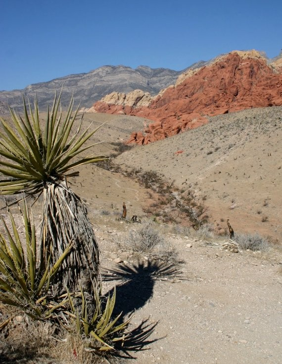 Red Rock Canyon V
