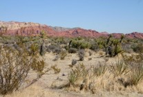 Red Rock Canyon XI