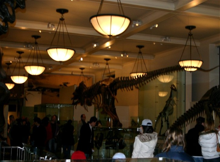 American Museum of Natural History X