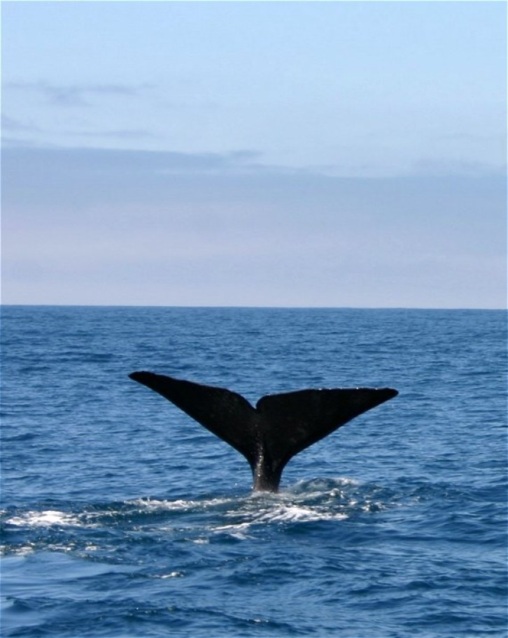 Whale-Watching in Kaikoura V