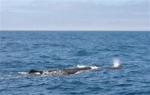 Whale-Watching in Kaikoura I
