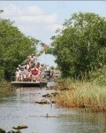Everglades-Trip mit Airboot und Alligatoren