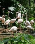 Singapore Zoo: Bester Zoo weltweit?